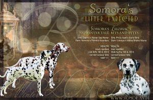 Collage Somora's R-Wurf