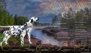 Collage Somora's S-Wurf